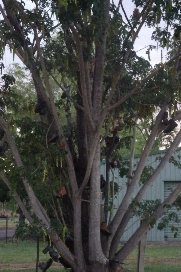 Boot tree (3)